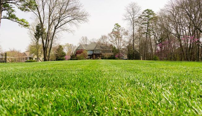 Knoxville Lawn Care