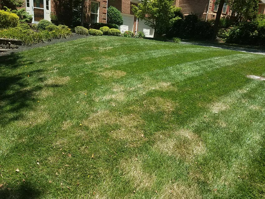 Charmant Brown Patch: Prevention And Treatment