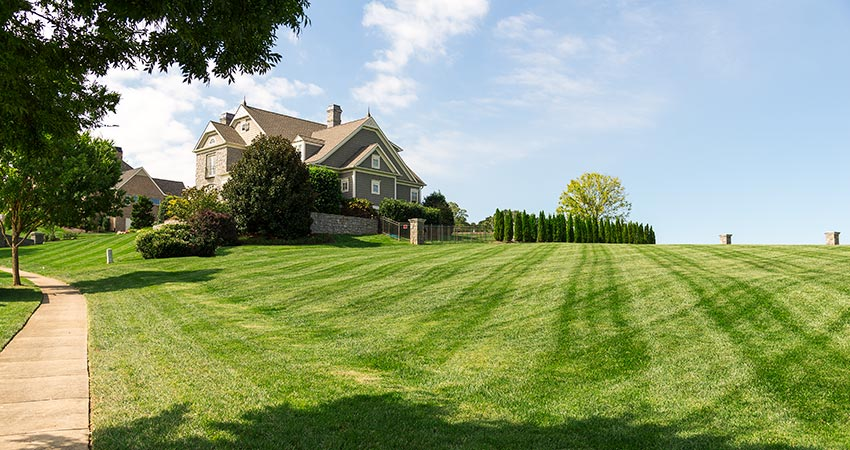Lawn Care Knoxville